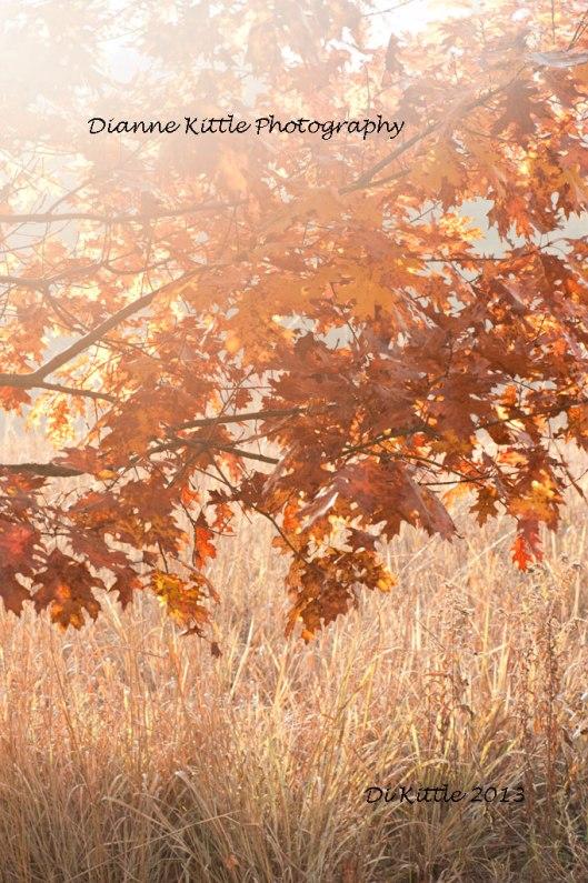 autumnsundikittle724
